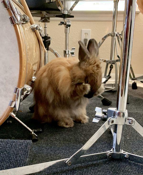 Rabbit thumbnail