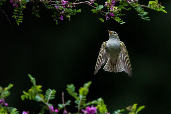 The Foraging warbler thumbnail