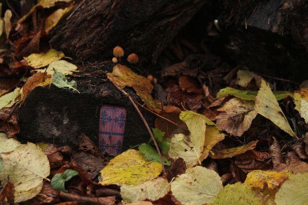 The Forest Floor thumbnail