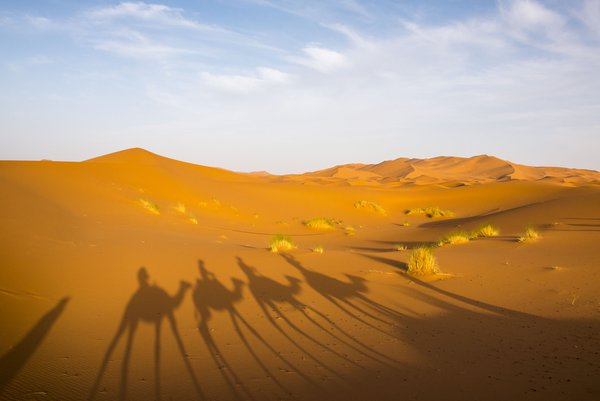 Sand and Shadows at the Erg Chebbi Dunes thumbnail