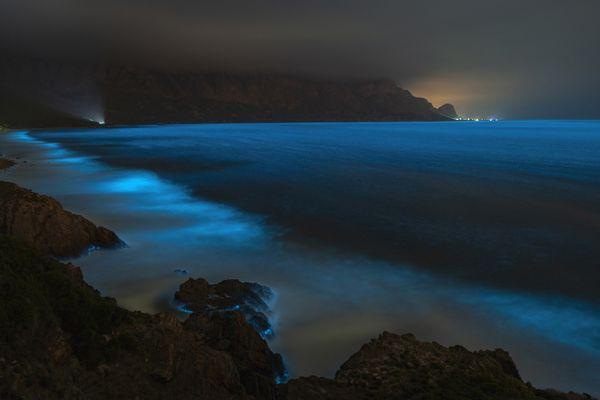 Bioluminescent Seascape thumbnail