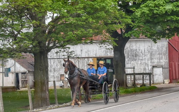 Amish boys thumbnail