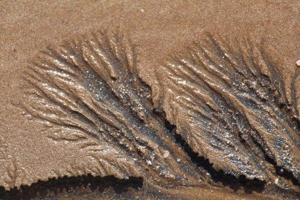 Fossil thumbnail