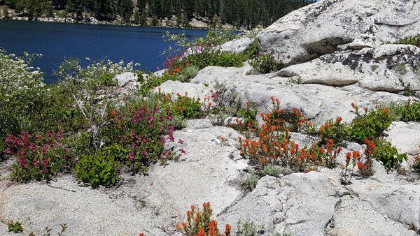flowers growing in rocks thumbnail