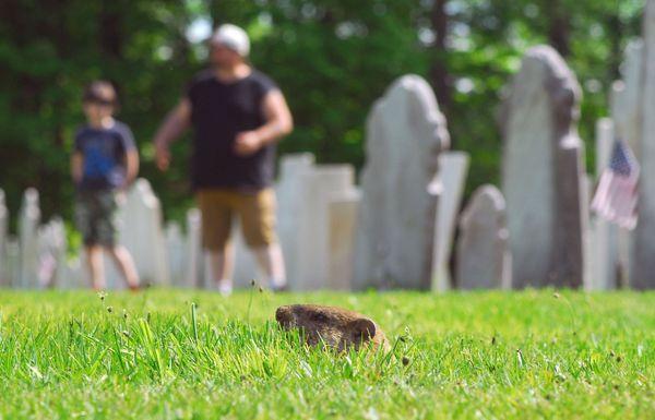 Cemetery Wanderings thumbnail
