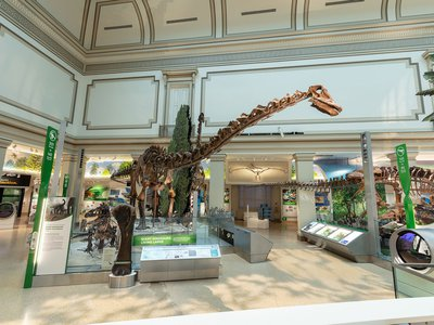 Towering over the Fossil Hall is the plant-eating sauropod <em>Diplodocus,</em> which has been on display since 1931 and now is posed with tail in the air.