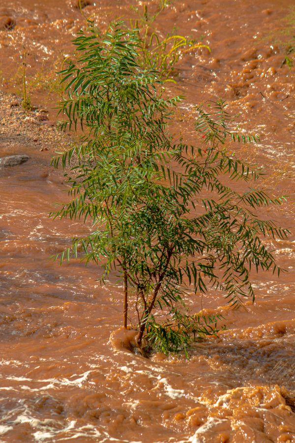 Monsoon Season thumbnail