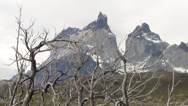 Bosque quemado en Torres del Paine thumbnail