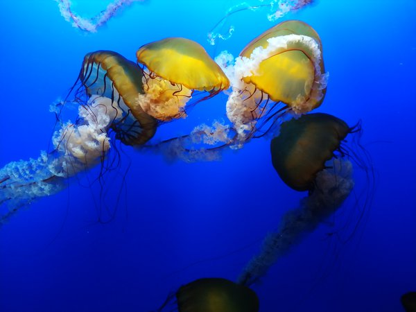 jellyfish swimming thumbnail