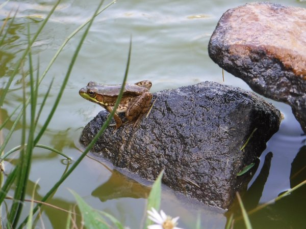 Wonders Of Nature Including Frogs thumbnail