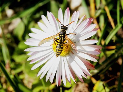 Even outside of Hollywood, wasps are fierce contenders in their own right.