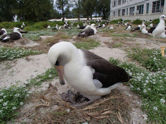 At 62, the Oldest Bird in the World Is Still Hatching Chicks