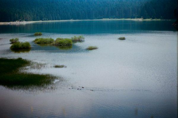 Wild ducks of Black Lake thumbnail