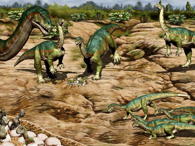 Each nest was found with eight to 30 eggs and in a relatively small area, suggesting that Mussaurus patagonicus raised its young in a communal breeding ground
