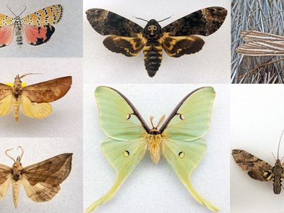 There are about 160,000 species of moths and butterflies worldwide, each with unique characteristics.
