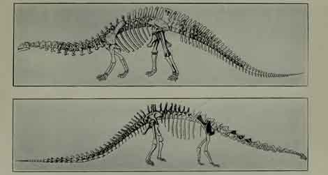"""The reconstructed skeleton of """"Brontosaurus"""" from W.D. Matthew's 1915 book Dinosaurs."""