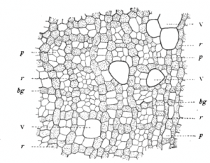 20110520083142fossil-wood-microstructure-300x232.jpg