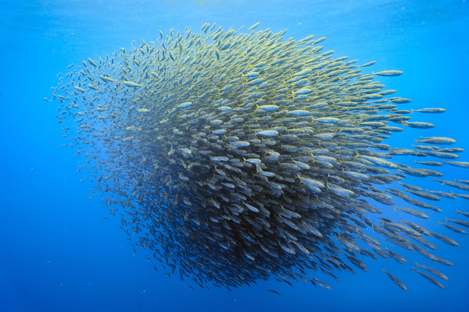 We're Terrible at Distinguishing Real And Fake Schools of Fish | Smart News | Smithsonian Magazine