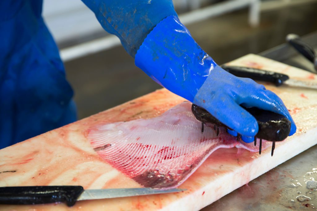 Biologists Rescue Unborn Baby Sharks at Fish Markets