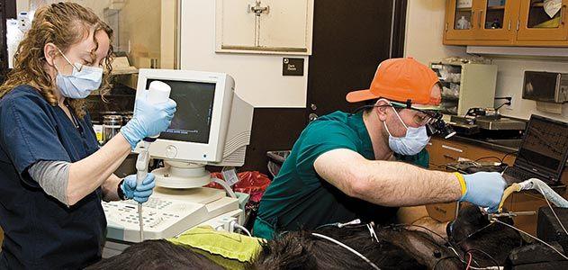 Barron Hall veterinary dentist