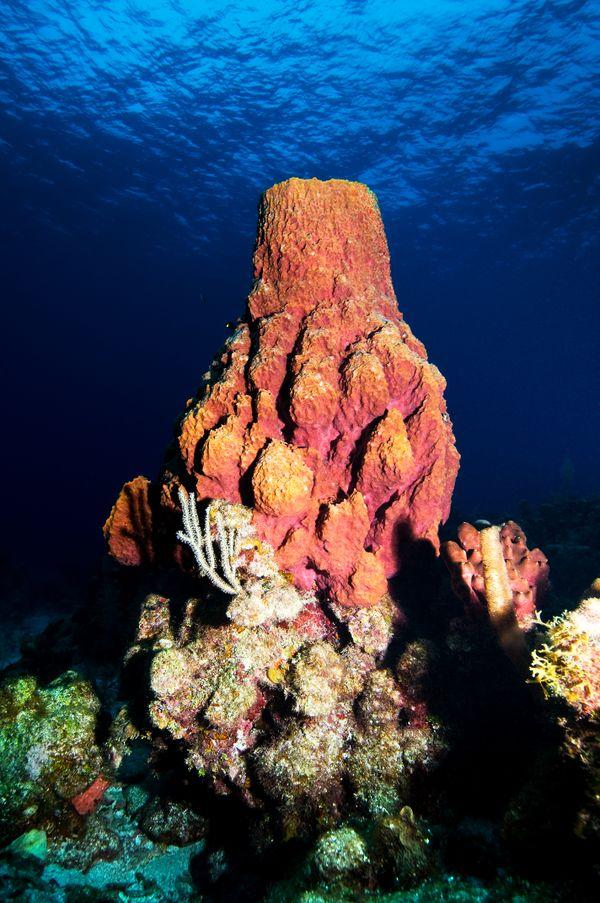 Barrel sponge thumbnail