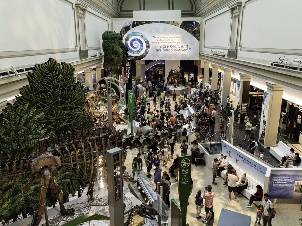 Visitors enter the Smithsonian's new fossil hall for the first on June 8 when it reopened after being closed for a five-year renovation. (Smithsonian Institution)