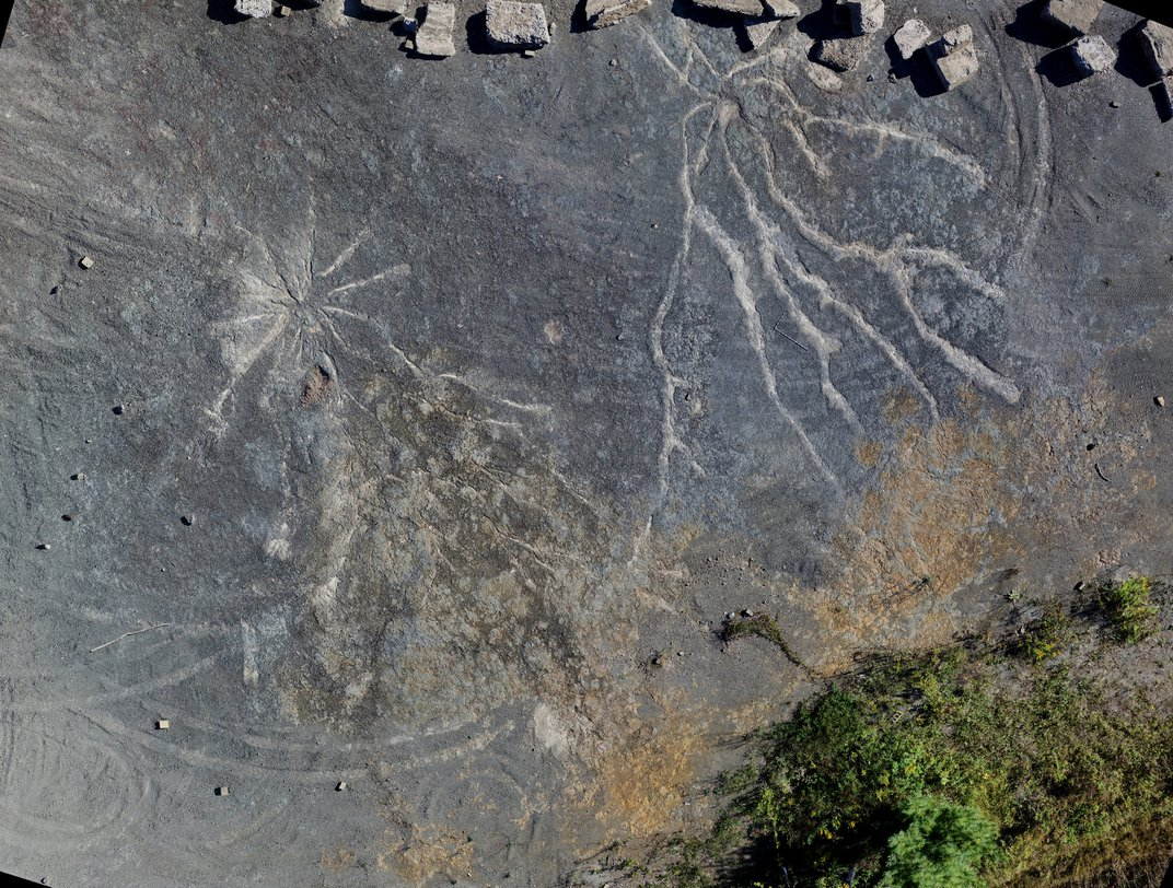 The World's Oldest Forest Has 385-Million-Year-Old Tree Roots