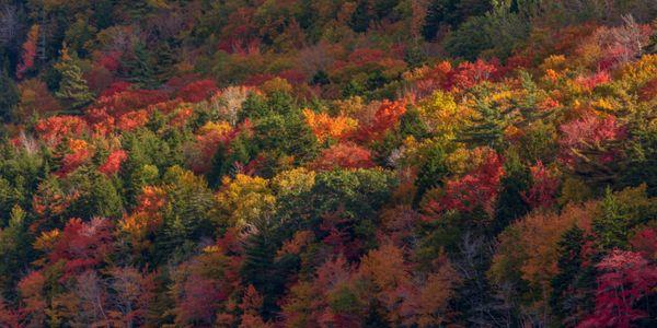 Nature's Palette thumbnail