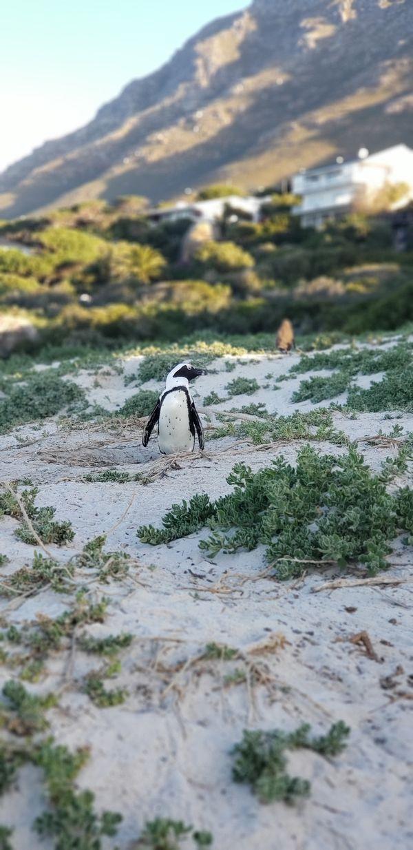 The Penguin thumbnail