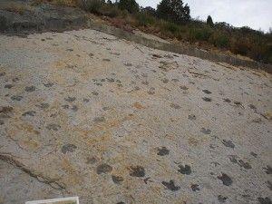 20110520083144dinosaur-ridge-tracks-300x225.jpg