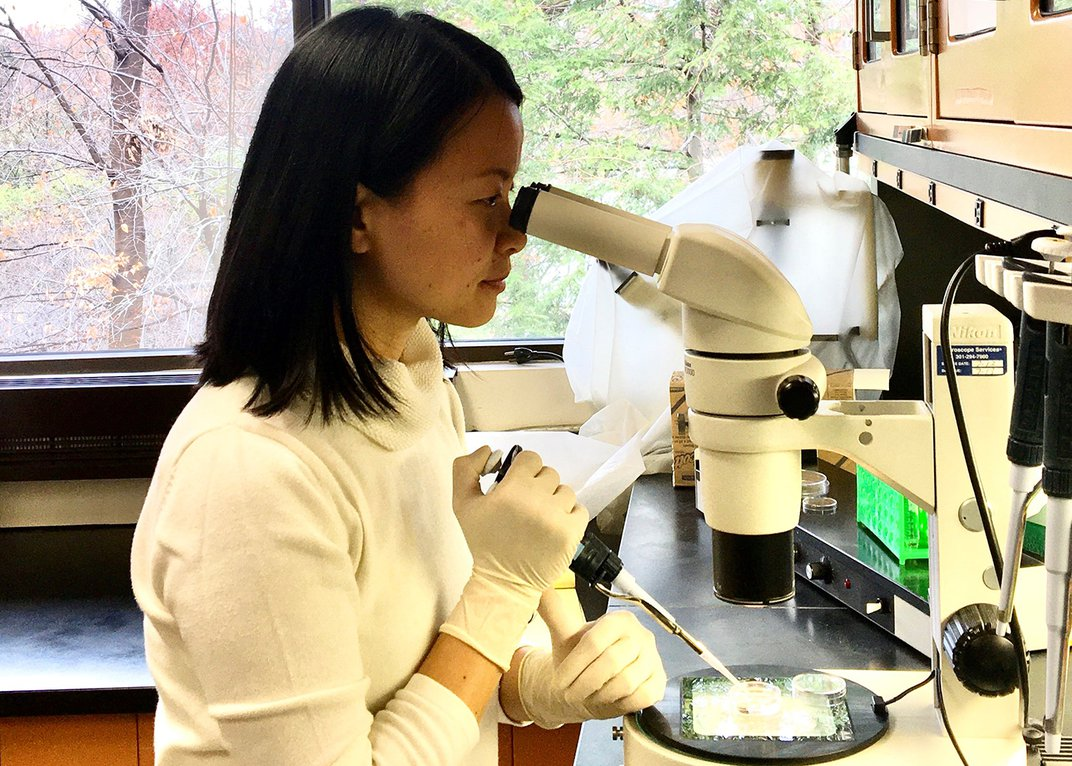 A Smithsonian researcher looks through a microscope and uses a pipette on the sample she's viewing.