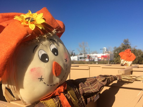 A scarecrow at the Enmax Park. thumbnail