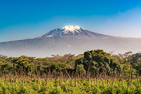 Mt. Kilimanjaro with foreground forest prior to ascent thumbnail