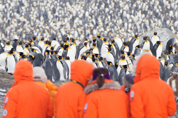 Expedition tourists brave the cold to watch king penguins thumbnail
