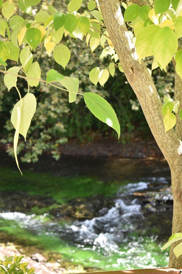 Sunlit Leaves thumbnail
