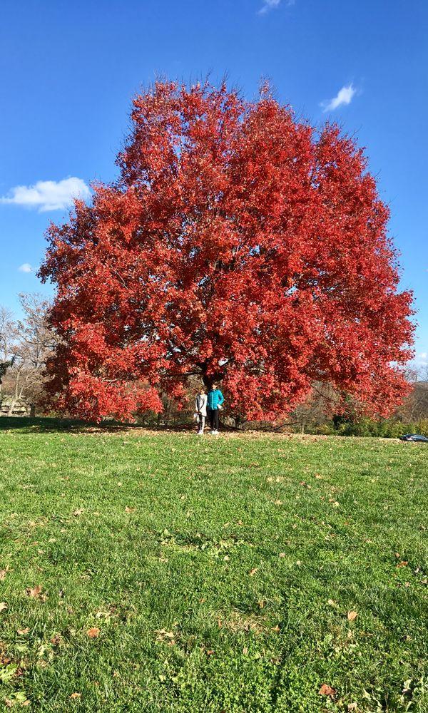 autumn splendor thumbnail