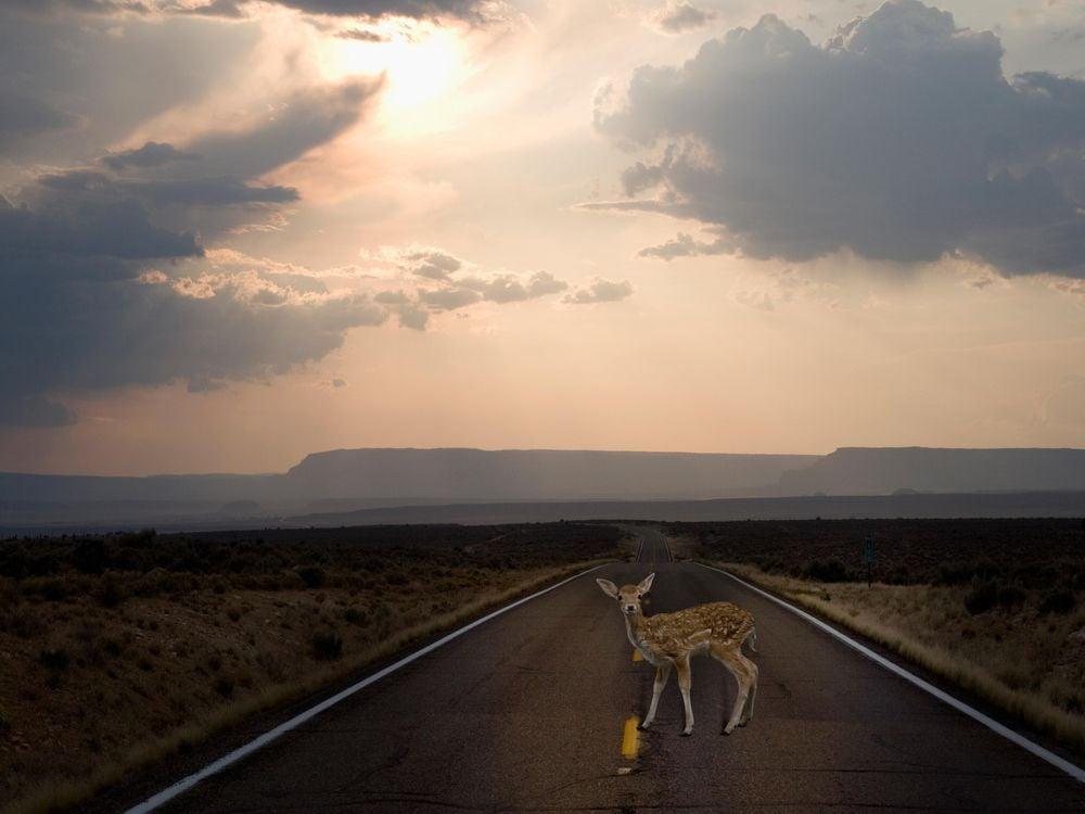 deer-in-road.jpg