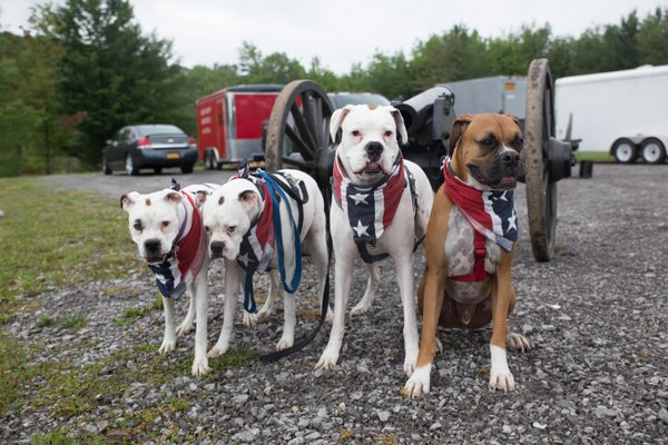 Confederate Dogs thumbnail
