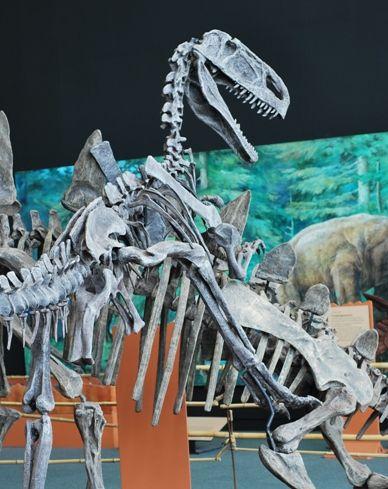 20110520083143chinasaurs-monolophosaurus-attack.jpg