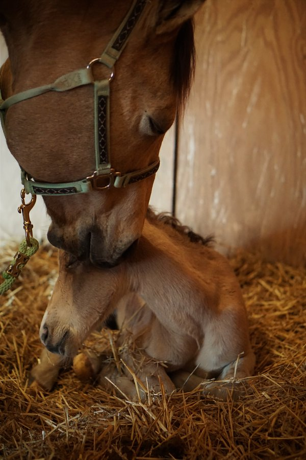 A Mare and her newborn Colt. thumbnail