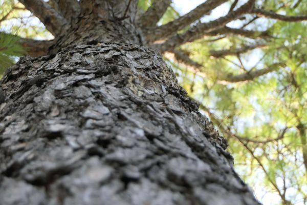The bark of a tree thumbnail