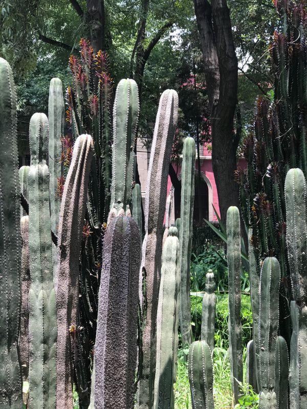 Cacti, Roma Norte, Mexico City thumbnail