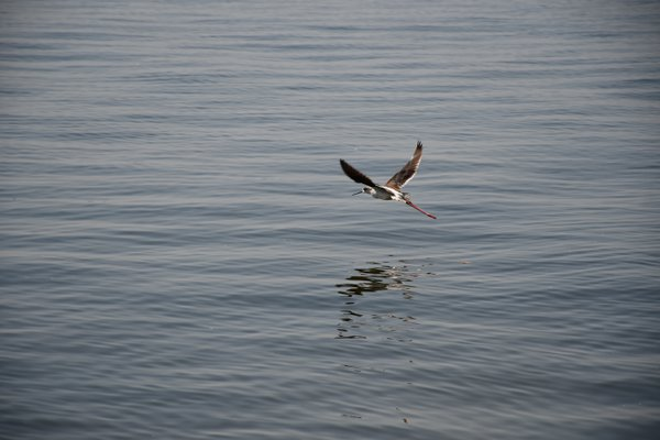 A bird flies over Lake Victoria thumbnail