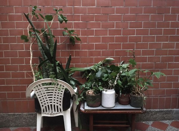 "Abuela's Plantas, ""Grandma's Plants."" thumbnail"
