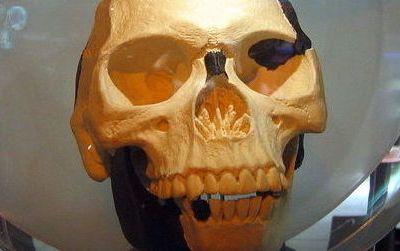 A replica of Piltdown Man