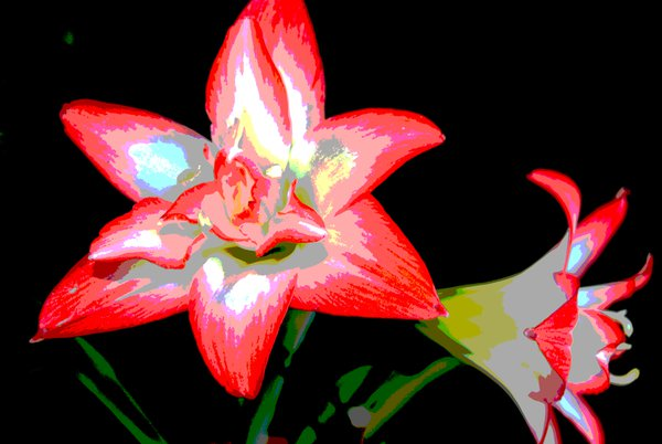 red and white lily  thumbnail