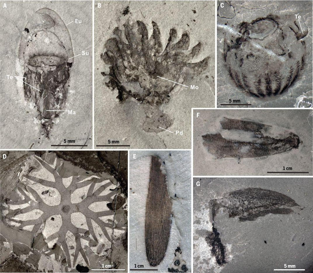 Fossil Treasure Trove of Ancient Animals Unearthed in China
