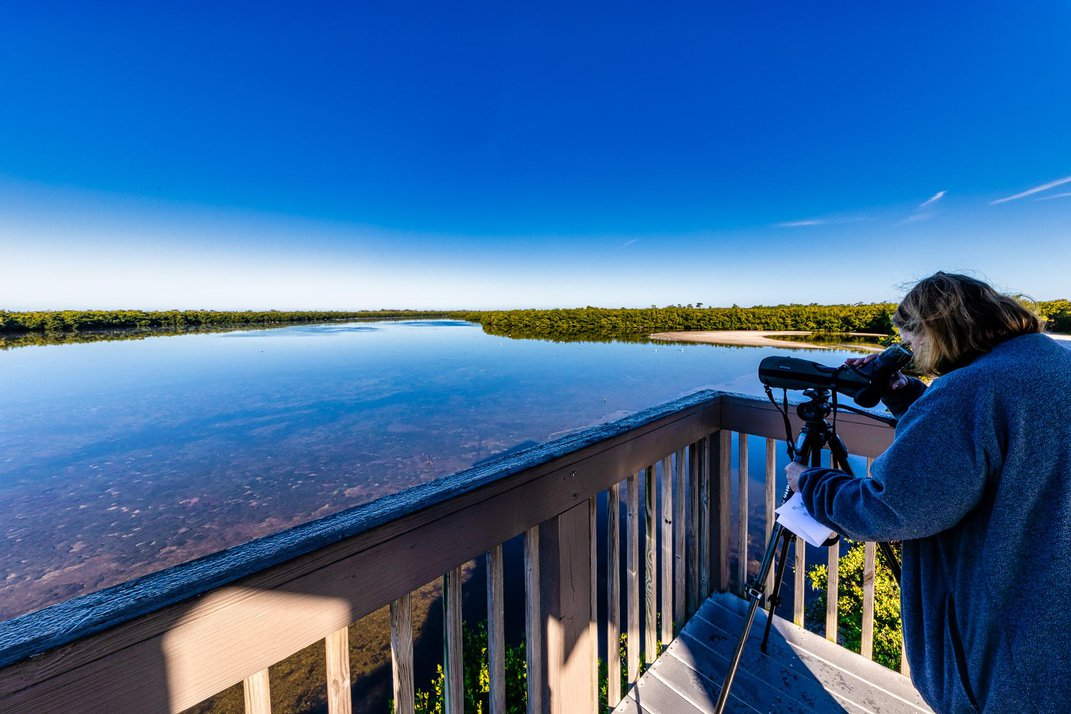 Why The Beaches of Fort Myers & Sanibel Is a Wildlife Adventurer's Dream Destination