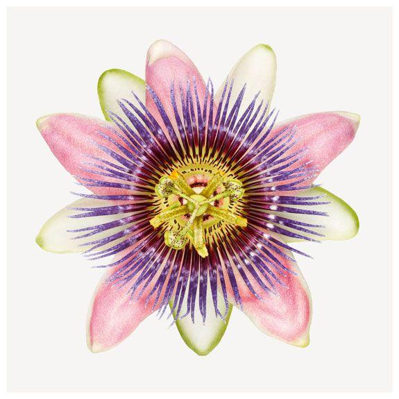 Flower Power, Redefined