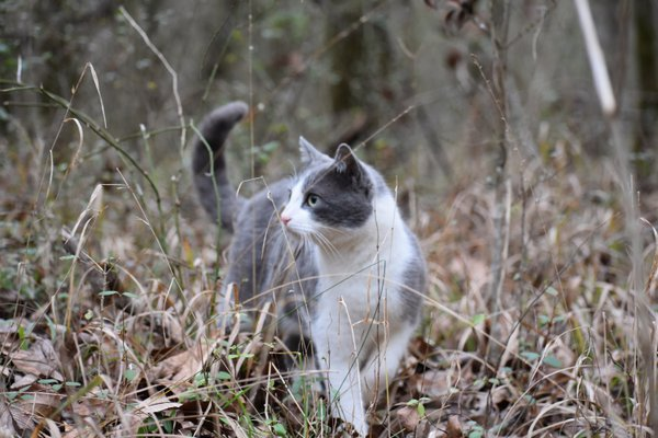 Cat exploring the forest thumbnail
